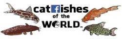 Catfishes of the World