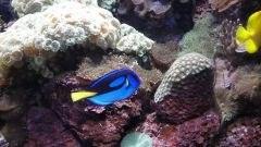 regal tang