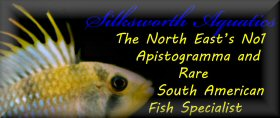 Silksworth Aquatics