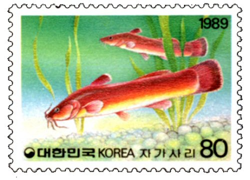 Liobagrus mediadiposalis = Catfish stamp