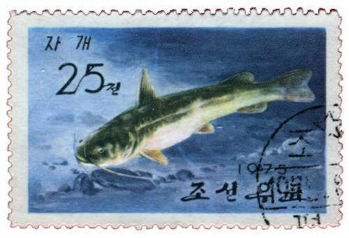 Tachysurus nudiceps = catfish stamp
