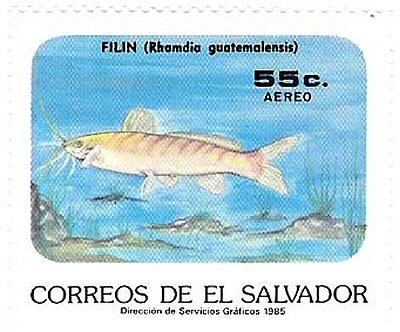 Catfish Stamp = Rhamdia quelen