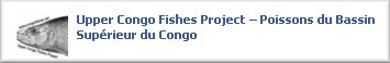 The Upper Congo Project